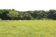PRELE(プレール):広い草原(森を背景に)