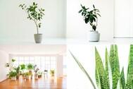 StudioBRICK 4F (スタジオブリック八丁堀4F):川沿いの開放的な屋上