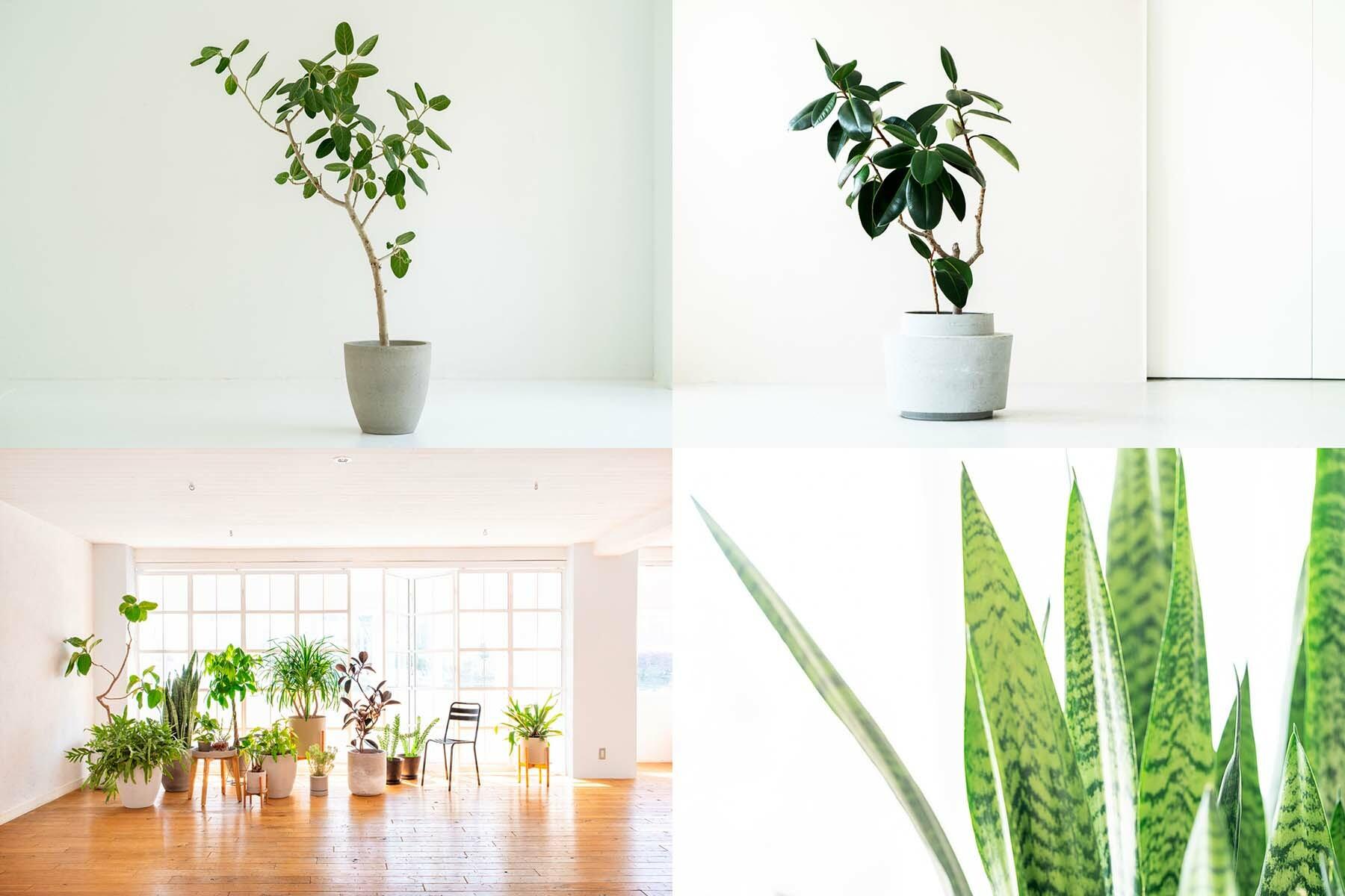 StudioBRICK 4F (スタジオブリック八丁堀4F)川沿いの開放的な屋上