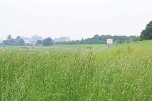 多摩川ロケ地(Studio Lulu 狛江)