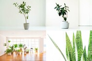 StudioBRICK 1F (スタジオブリック八丁堀1F):川沿いの開放的な屋上