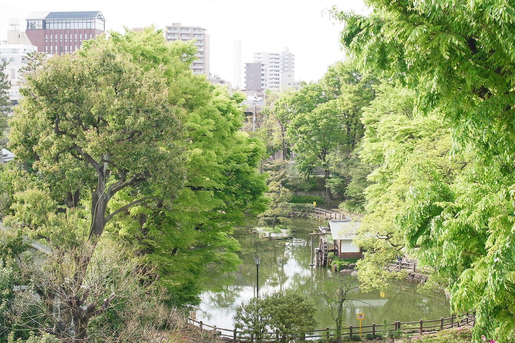 SHOTOHOUSE302 (ショウトウハウス302)鍋島松濤公園の眺望
