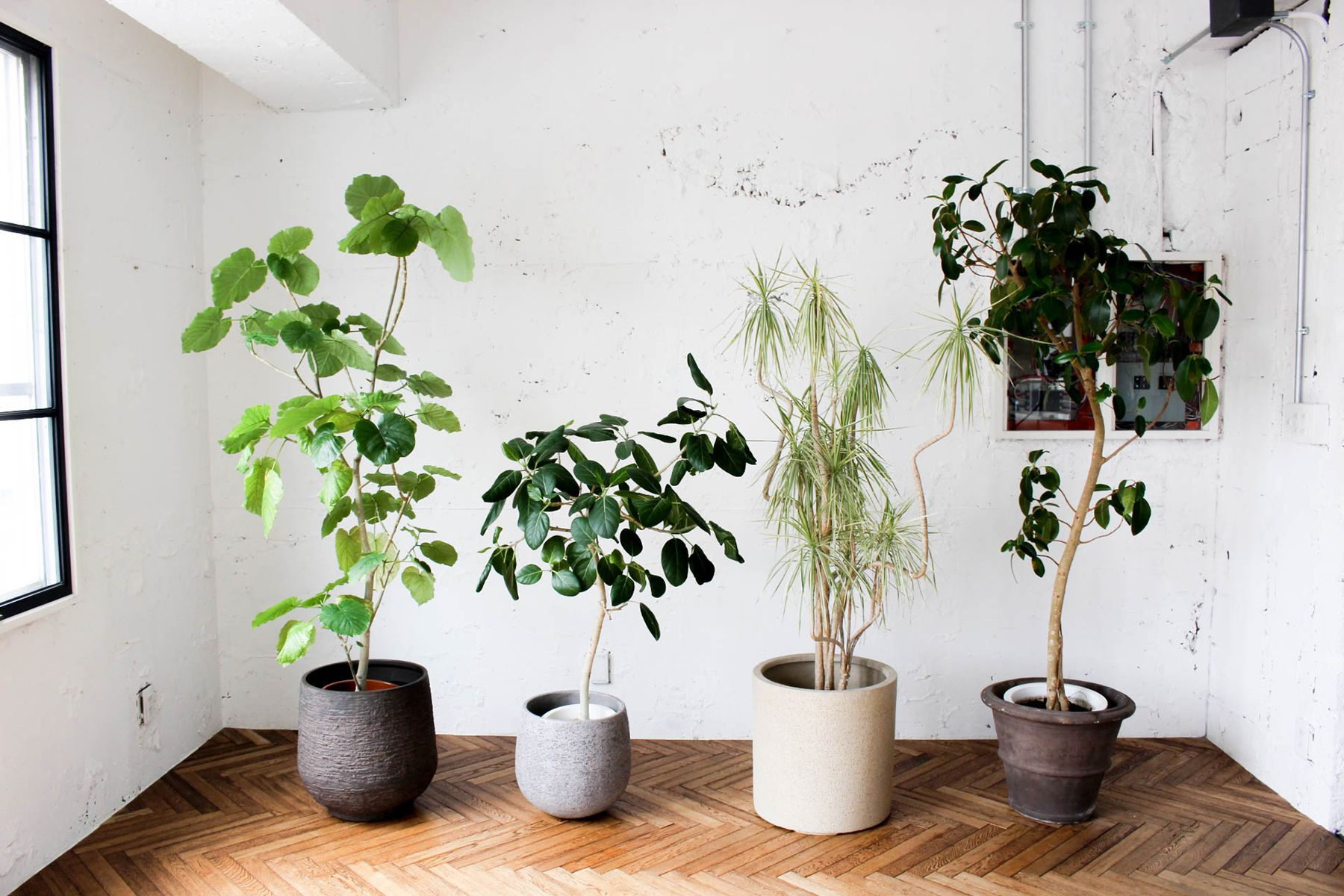 atelier rauque Cstudio (アトリエロークCスタジオ)植栽も豊富