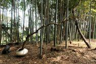 古民家スタジオ 火林荘(かりんそう):敷地内の竹林