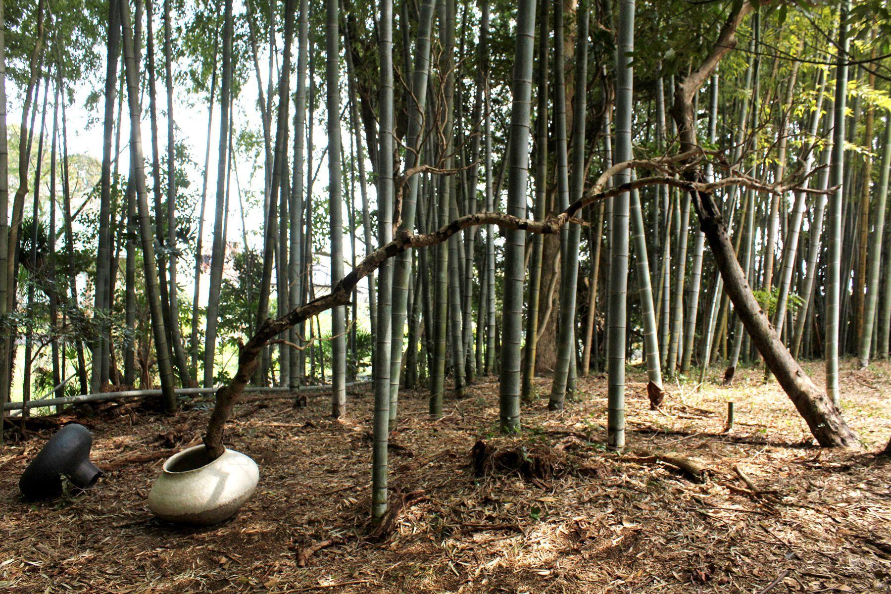 古民家スタジオ 火林荘(かりんそう)敷地内の竹林