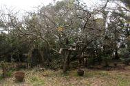 古民家スタジオ 火林荘(かりんそう):敷地内の庭