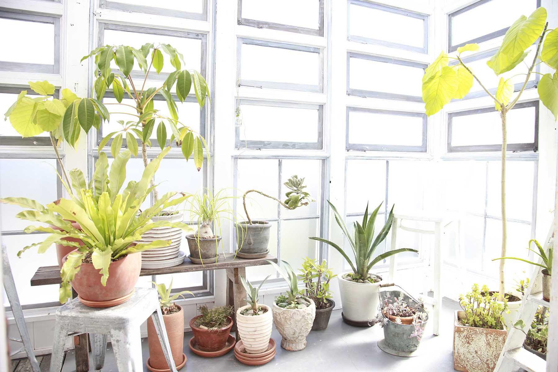 8 EIGHT FLAGS STUDIO (エイトフラッグススタジオ)前庭玄関横ポーチ
