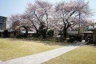 自由学園明日館(重要文化財):庭