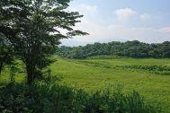 グリーンゲーブル富士ヶ嶺 (グリーンゲーブルフジガネ):森 回遊路も作っています