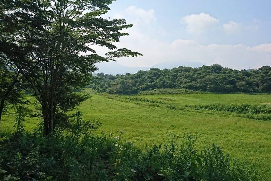 グリーンゲーブル富士ヶ嶺 (グリーンゲーブルフジガネ)森 回遊路も作っています