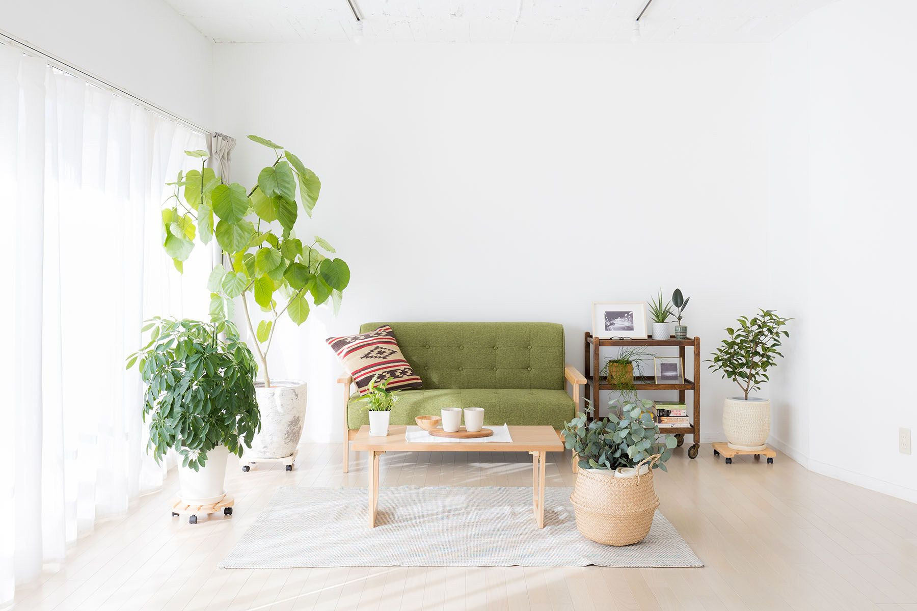 Studio Serato 代々木 (スタジオセラート代々木)大きい窓と木目の壁が柔らかな空間