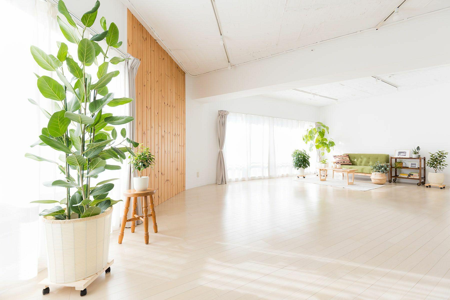 Studio Serato 代々木 (スタジオセラート代々木)使いやすい白壁と木目の床