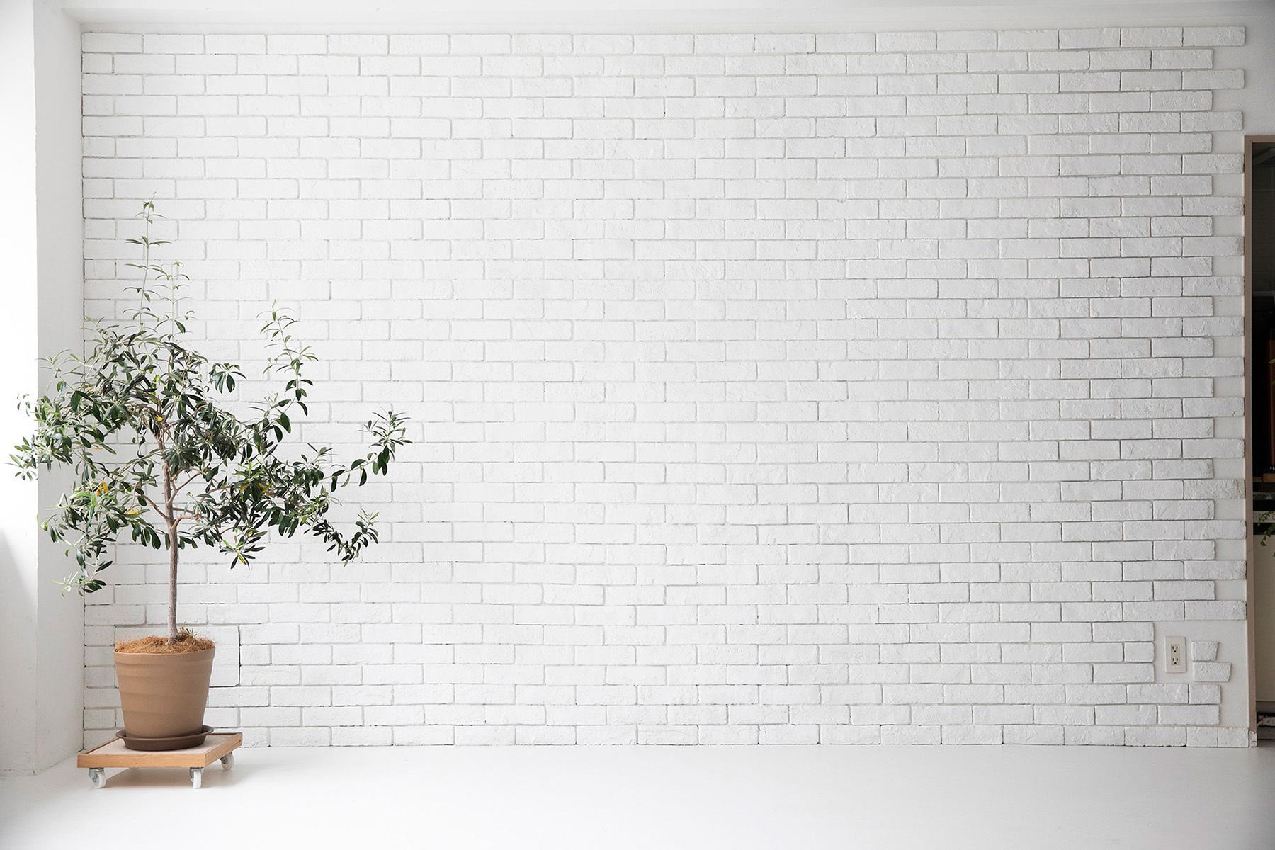 studio Mired(スタジオ ミレッド)南向きの窓