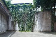 noru studio (ノル スタジオ):中庭のコンクリート壁とグリーン