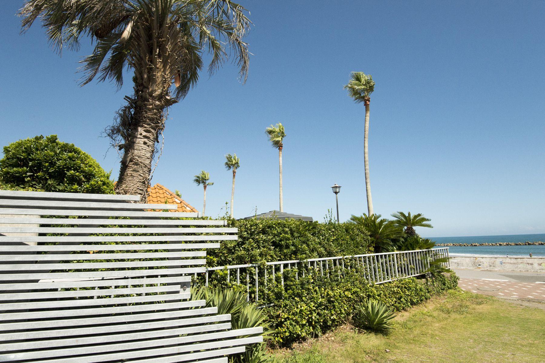 鴨川サーフィンハウスヤシの木と緑豊富な敷地