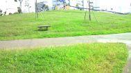 大森ふるさとの浜辺公園:丘の広場