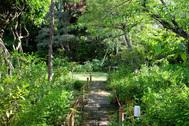 雪ノ下の茶亭:庭抜けのフローリング部屋