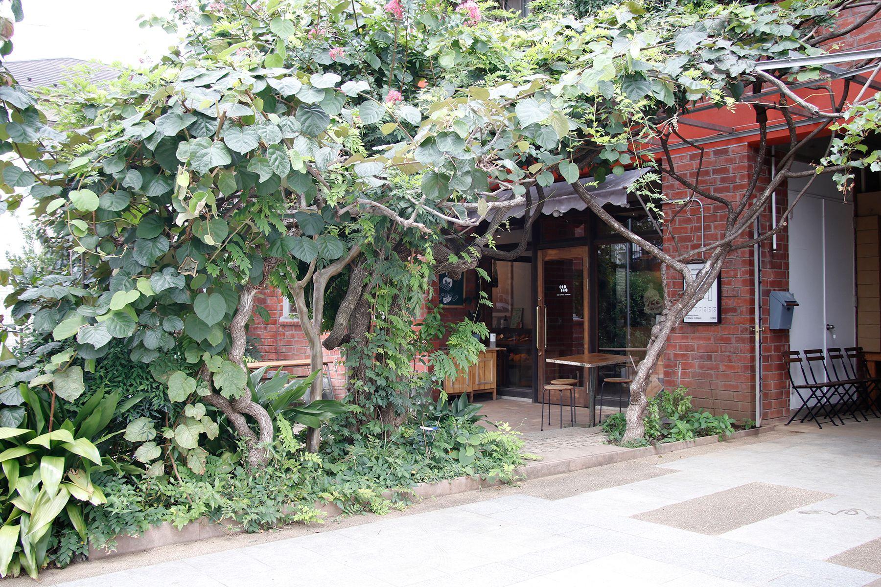 micotoya house (アイス屋/青果屋/shop)存在感ある緑
