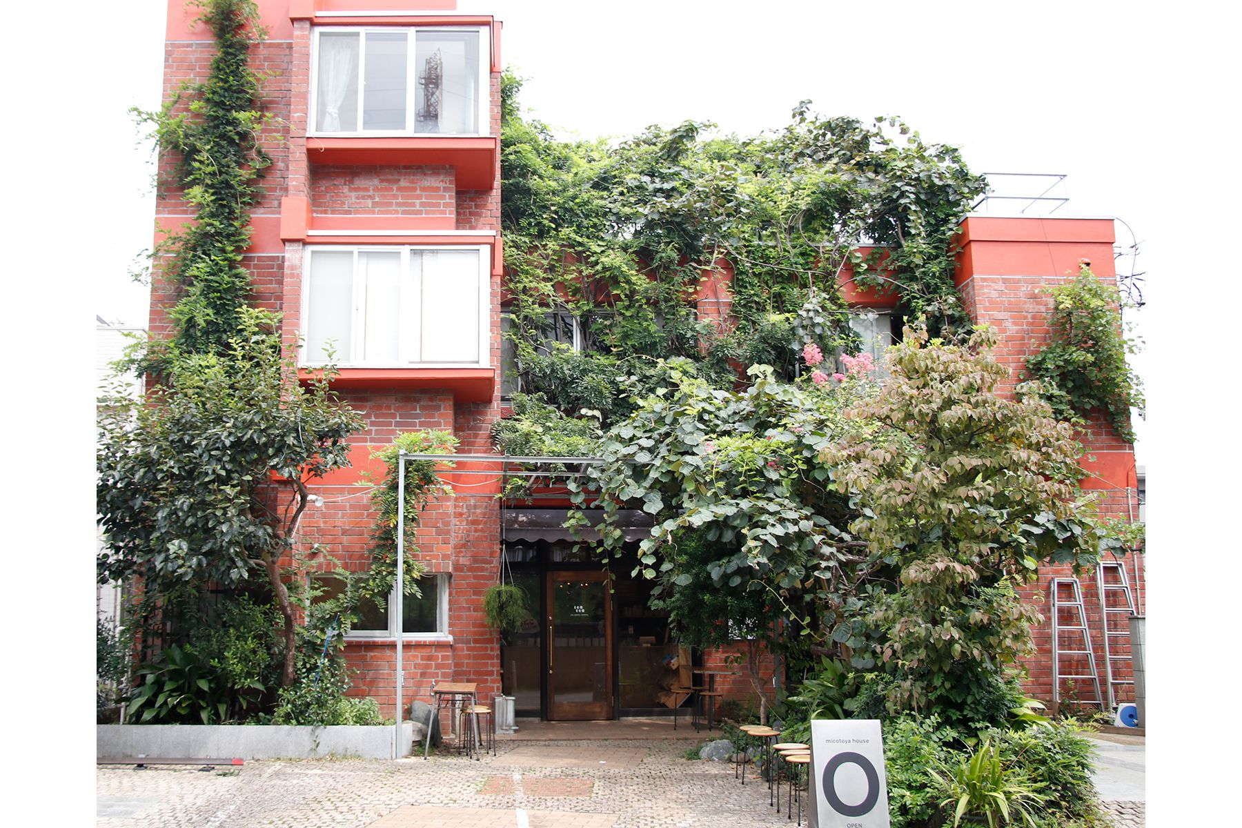 micotoya house (アイス屋/青果屋/shop)建物を蔦が覆う
