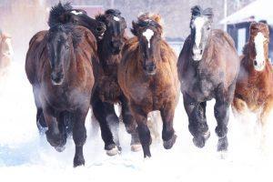 寒さに負けず転職まっしぐらの馬