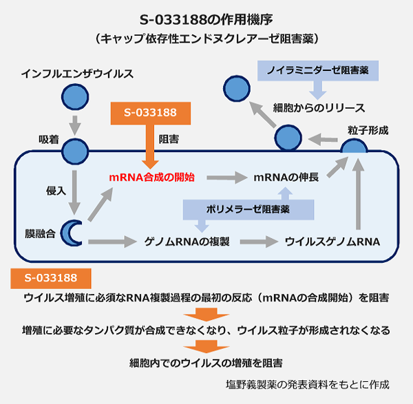 S-033188の作用機序(キャップエンドヌクレアーゼ阻害薬)