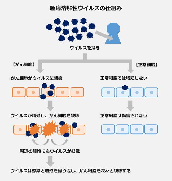 腫瘍溶解性ウイルスの仕組みの図