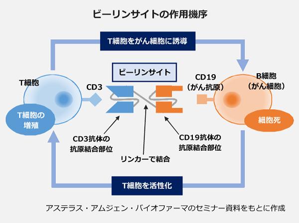 ビーリンサイトの作用機序の図。