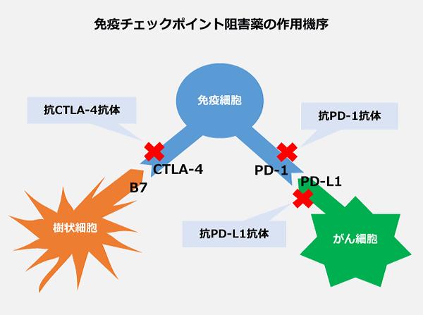 免疫チェックポイント阻害薬1-5