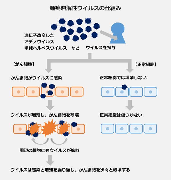 腫瘍溶解性ウィルスの仕組みの図。