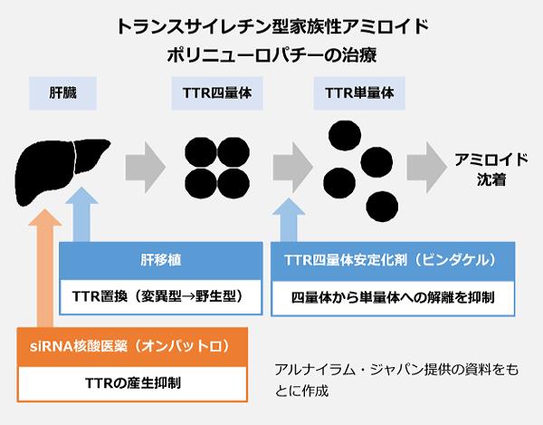 トランスサイレチン型家族制アミロイドポリニューロパチーの治療