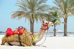 ビーチでくつろぎ、夏休みを満喫しているラクダ