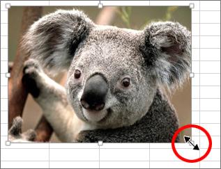 エクセル画像大きさ変更の方法