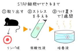 STAP細胞のメカニズム