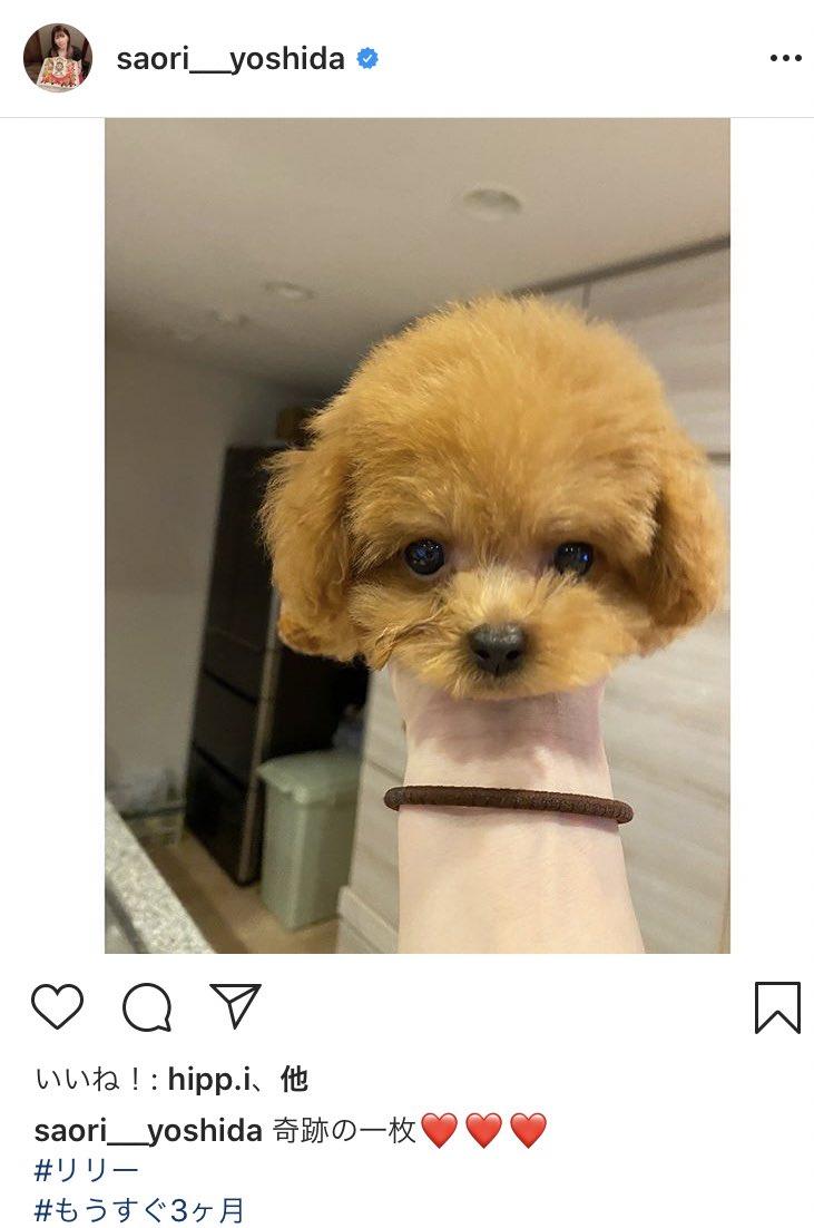 吉田沙保里が自らの愛犬の首を片手ではねた衝撃的なインスタの投稿が面白すぎる