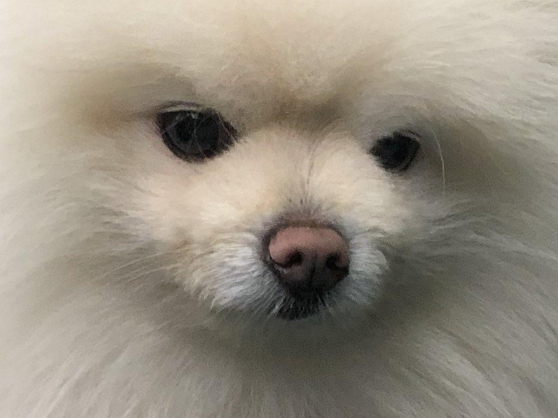 洗われる直前の犬