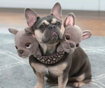 ケルベロスのコスプレ最高じゃん、うちのイヌにも着せたい👴🏻