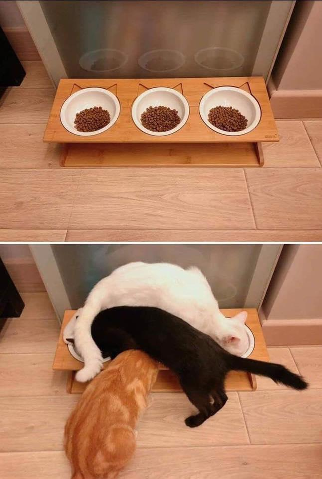 人間には理解不能な猫ロジック