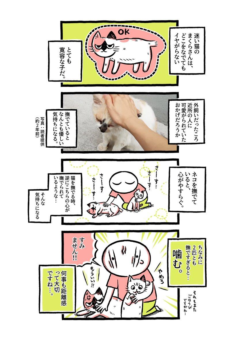 ヨボヨボの迷い猫を保護したら…撫でていい場所は、猫によって違うのです【9】