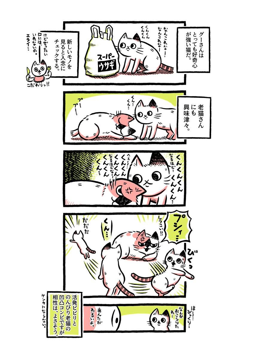 老猫を保護したら…ずっとひなたぼっこしたり、飼ってた猫を叱ったりしていた【5】