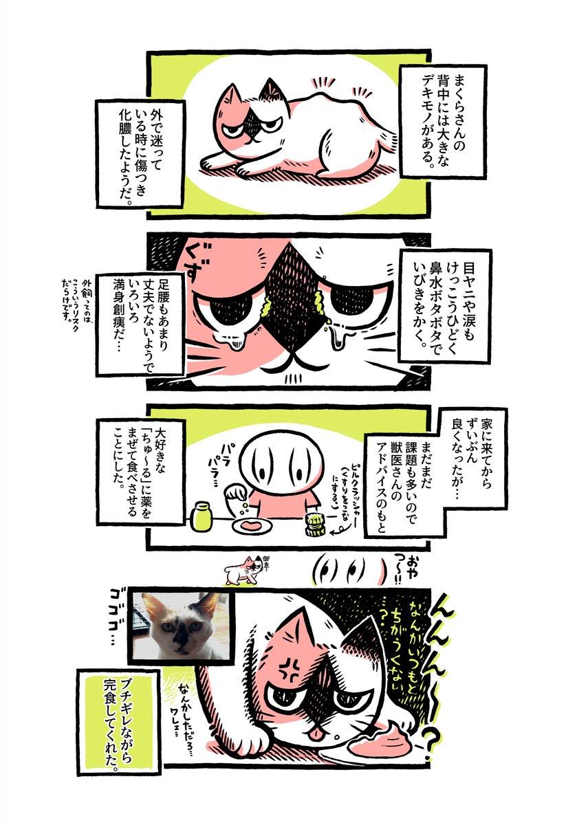 ヨボヨボの迷い猫を保護したら…お巡りさんが協力してくれたり、ちゅ〜るを汚してブチギレられたりした