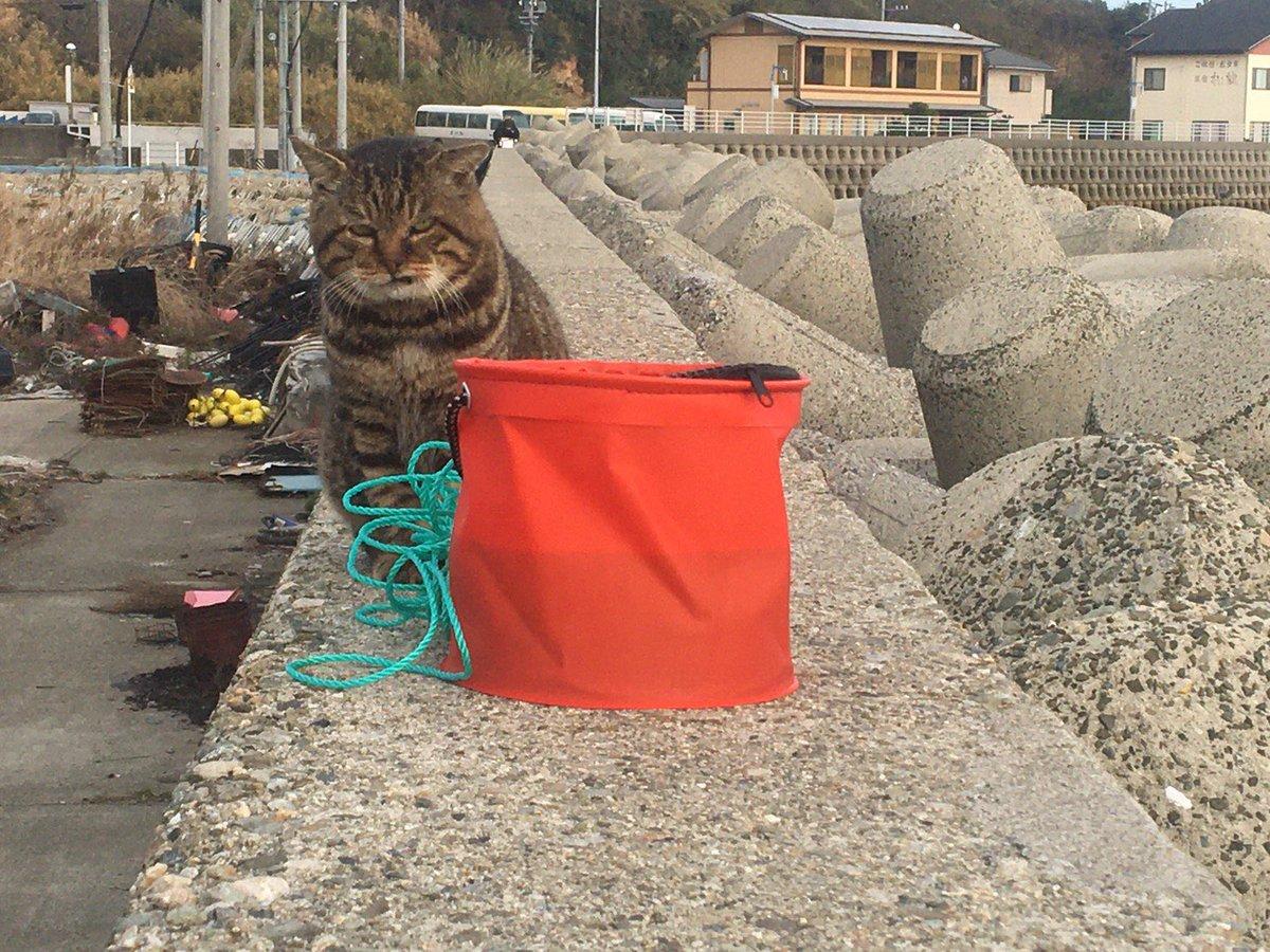これはバケツに魚が居る事を知っていて、蓋を閉じられていることにバチ切れてる猫