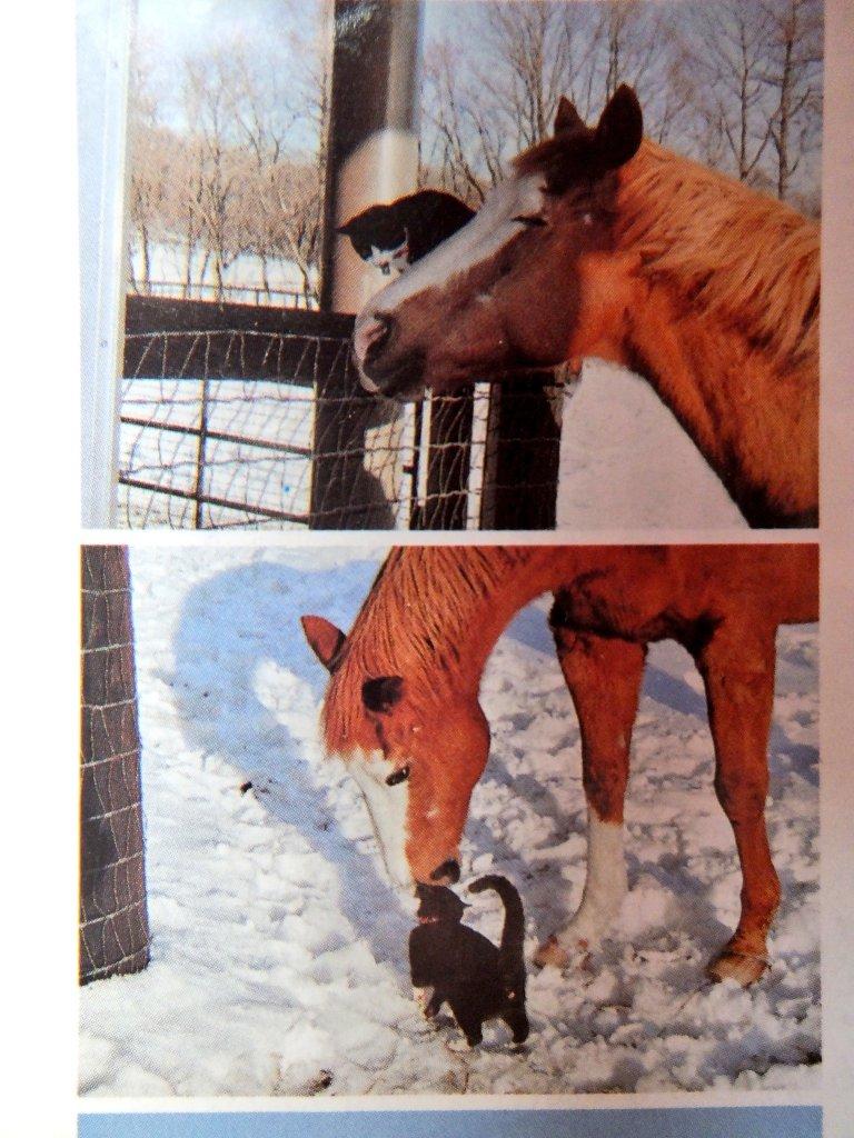 頭に猫を乗せていて人間離れした白いメッシュの髪が特徴ということで秋川理事長が日本競馬界伝説の種牡馬ノーザンテーストだと考察したウマ娘ガチ勢ほんと尊敬する
