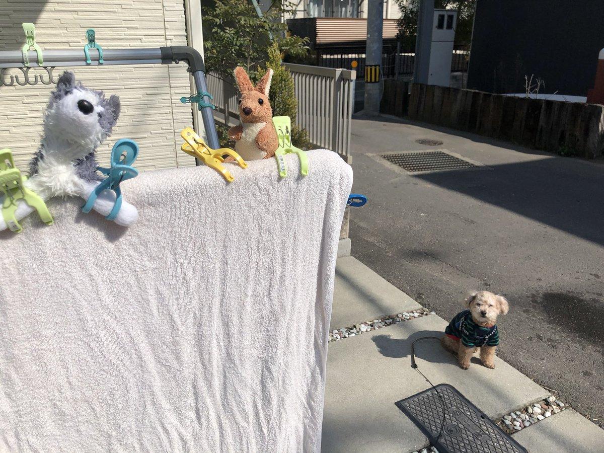 お気に入りおもちゃまた洗われ犬