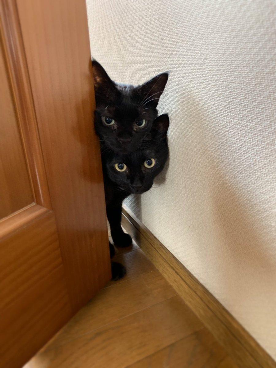 うちに新しい子猫がやってきたんだけど、元々いた二匹の反応がまさに可愛いと噂の転校生を見にきた男子高校生のそれ