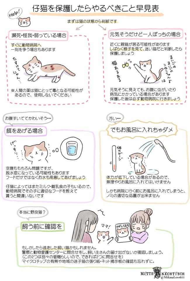 #猫の日 なので、今まで描いた猫知識を貼っておきますね