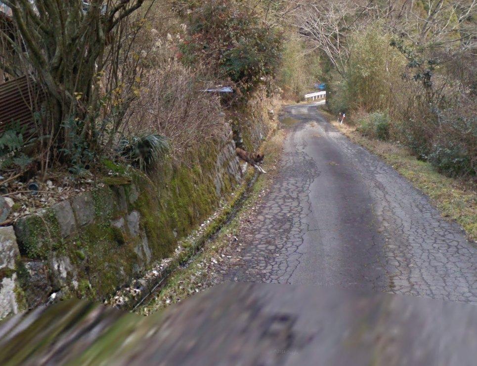 これは四国の3人しか住民がいない廃村一歩手前の集落のストリートビューに映っている、Googleの車を全力で追いかける犬