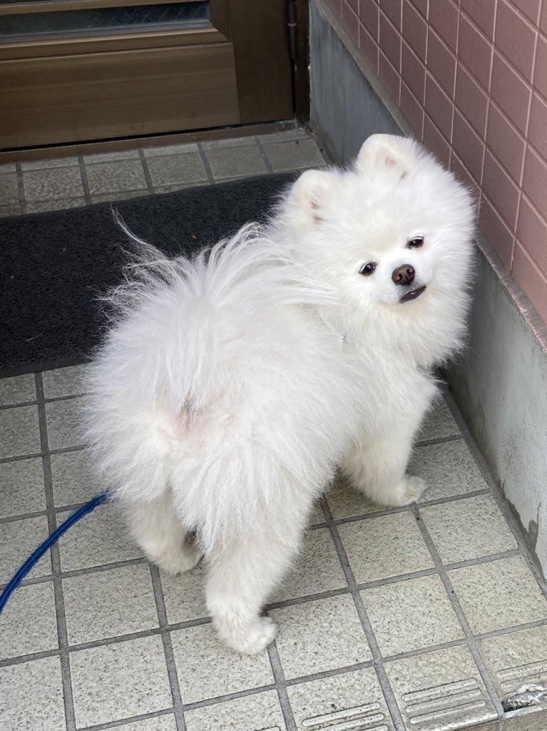 玄関で散歩拒否を試みるも、伝わらない1歳児により強制連行される犬