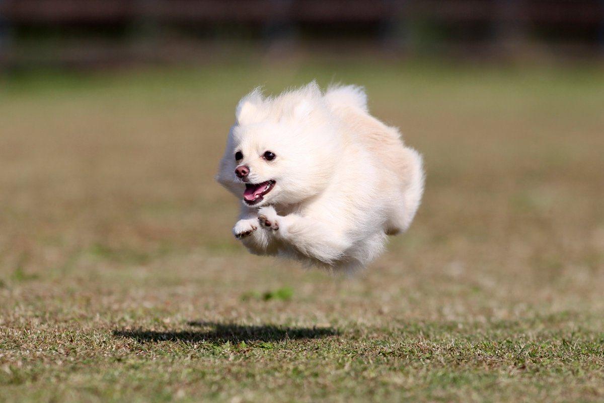 みんな 飛んでる犬でも見て元気だそうぜ