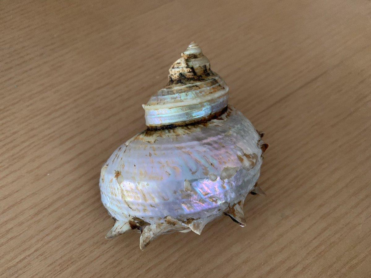 サザエの貝殻にサンポールをかけてやすりで磨くと... _人人人人人人_ > こうなる <  ̄Y^Y^Y^Y^Y^Y^ ̄