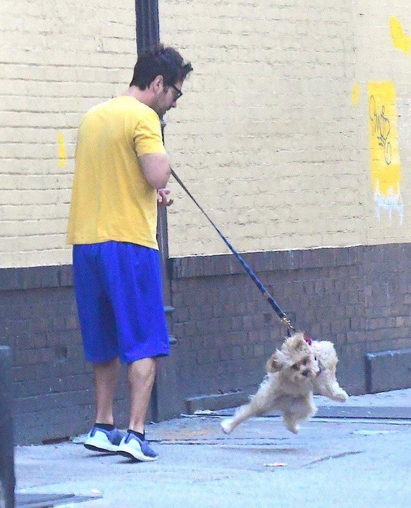 かっこよさしかないトムヒの犬のお散歩と面白さしかないポール・ラッドの犬のお散歩です